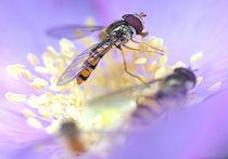 Hoverflies von dirk driesen
