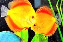 Fische im Aquarium von shark24