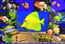 Fische u. Vögel - Collage von shark24