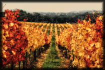 Vineyard Autumn by John Monteath