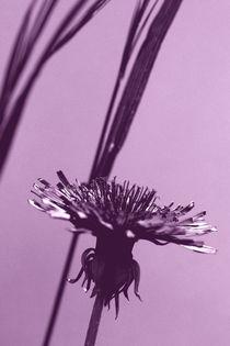 Purple Blüte von Bastian  Kienitz