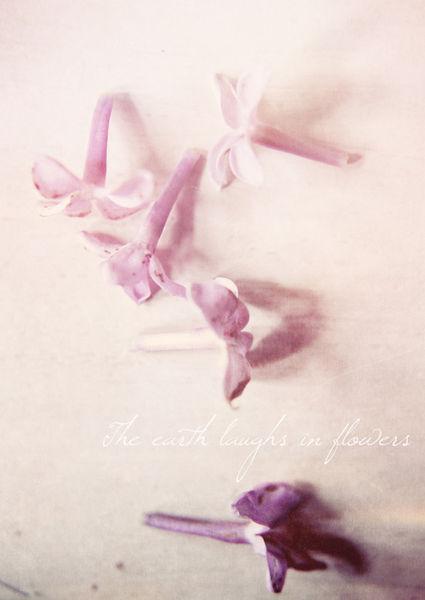 Theearthlaughsinflowers-c-sybillesterk