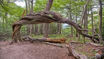 Der Baum von Steffen Klemz