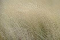 dune grass1 by ben seelt