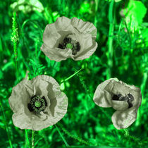 Reversed Green poppies  by Rob Hawkins