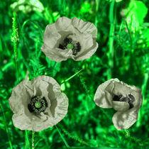 Reversed Green poppies  von Rob Hawkins