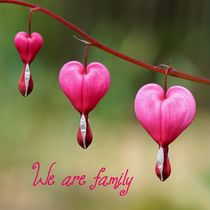 We are family... von dirk driesen