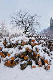 Winter has arrived by Raffaella Lunelli