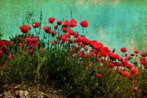 Mohn by pahit