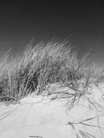 Dünengräser von kiwar