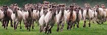 wilde Herde  von Barbara  Keichel