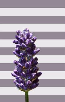 Purple rain von Bastian  Kienitz