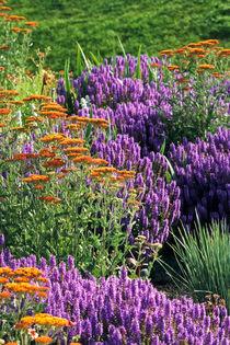 Goldgarbe (Achillea filipendulina 'Feuerland') und Steppensalbei (Salvia nemorosa) - Fernleaf yarrow (Achillea filipendulina 'Feuerland') and woodland sage (Salvia nemorosa) von botanikfoto
