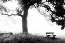 Tree and a bench, Bohemian Switzerland (Elbe Sandstone Mountains, Czech Republic) by Alexander Borais