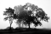 Bäume:  Elbsandsteingebirge von Alexander Borais