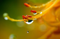 Beauty of rain von dirk driesen