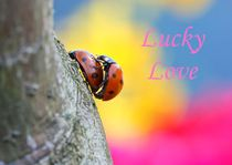 Lucky Love by dirk driesen