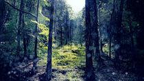 Rain forest by Gealt Waterlander