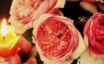 Rosenlicht ~2~ von Christine  Hofmann