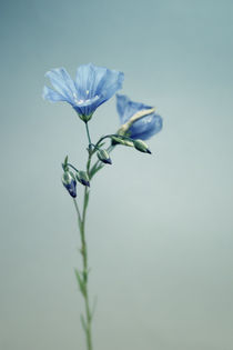 Blaue Blüte by Bastian  Kienitz