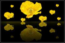 Pluie-fleurie-2