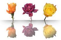 Trio-de-reflets-roses