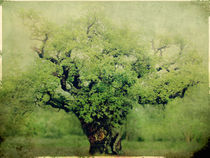 Ye Old Oak Tree von Linde Townsend