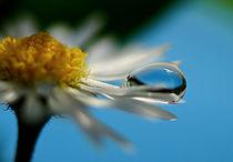 Mini beauty, kleine Schönheit by dirk driesen