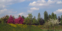 Frühlingslandschaft, Frühlingserwachen (springtime awakening) von Dagmar Laimgruber