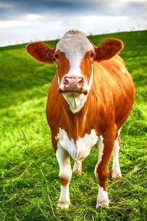 Kuh auf grüner Wiese von Gina Koch