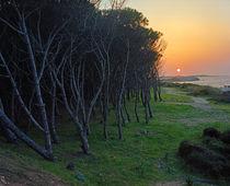 Bäume auf Sardinien | Trees on Sardinia by Alexander Borais