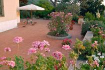 Blumenterrasse - Sardinien von captainsilva