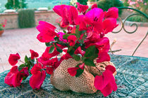 Sardische Bougainvillea by captainsilva