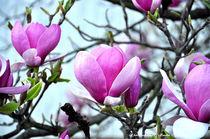 Blumen, Blüten, Flora, Flowers, Frühling by shark24