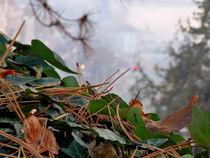Foggy Autumn Day von bebra