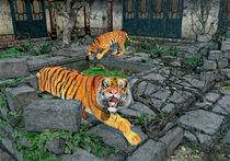 Tigers in the Courtyard by Peter J. Sucy