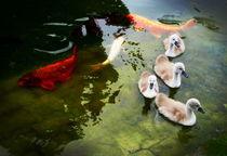 im Teich  ~1~ by Christine  Hofmann