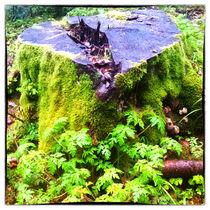 Baumstumpf mit leuchtend grünem Moos von Gina Koch