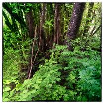 Waldlandschaft bei leichtem Regen und Nebel by Gina Koch