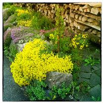 Schöner Vorgarten von Gina Koch
