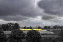 Gelber Streifen im Frühling - Yellow stripe in the spring by ropo13