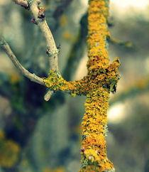 Yellow meets grey. by inbildundschrift