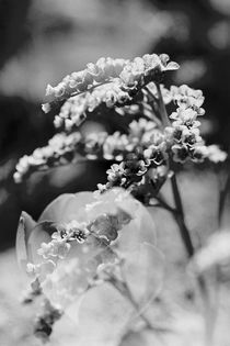 Spring Flowers - Black and White double exposed von chriscolinpix