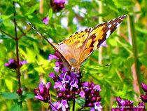 gelber Schmeterling, Falter, Butterfly von shark24