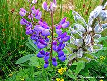 Blumen, Blüten, Flora, Natur von shark24