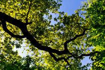 Into the tree canopy by David Pyatt