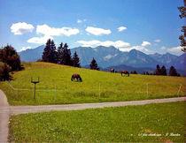 Allgäu, Wiesen, Wälder und Berge von shark24