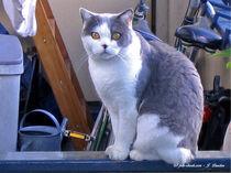 Schöne Katze, Tiere von shark24