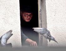 Man Feeding Pigeons by bebra