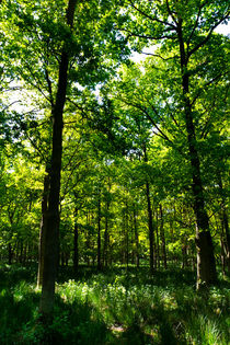Peaceful Forest by David Pyatt